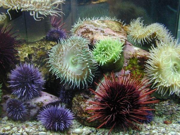 Найотруйніші підводні мешканці