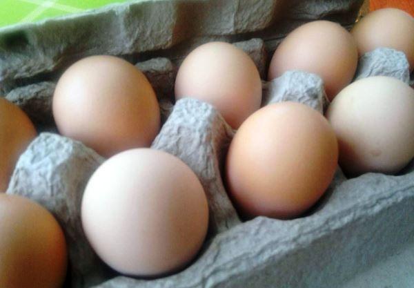 Яйця породи курей Джерсійський гігант