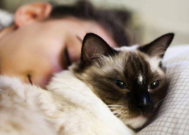 Самі ласкаві породи кішок: ТОП-15