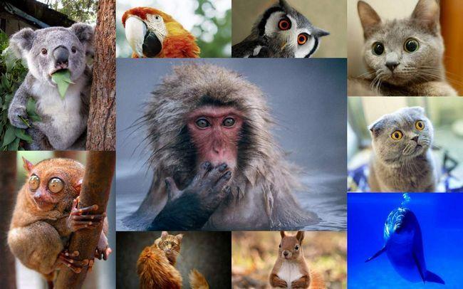Самі незвичайні тварини в світі.