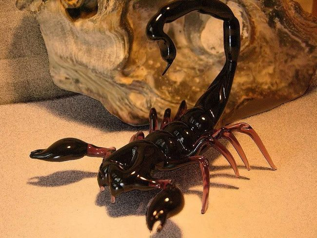 Деякі види скорпіонів представляють небезпеку, і навіть здатні викликати смертельний результат, особливо у дітей.