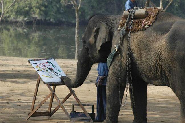 Найвидатніші живописні полотна, створені тваринами