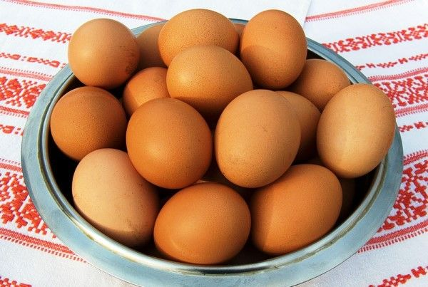 Розведення курей на яйця