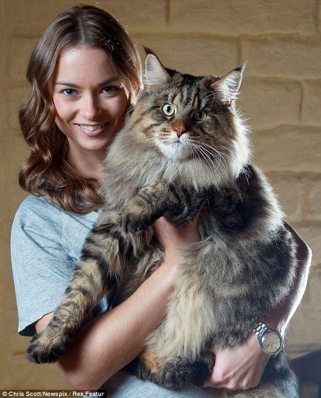Найбільшим котом в світі став мейн-кун на прізвисько Руперт