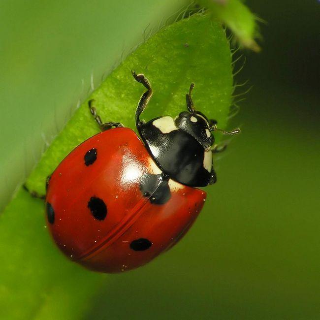Вчені сподіваються завдяки живучості жуків відкрити раніше невідомі факти еволюції життя на Землі.