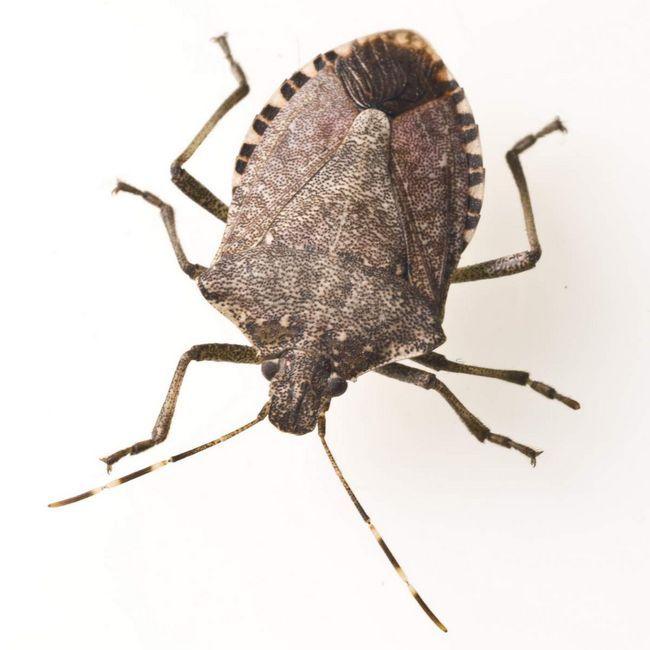 Сонечка, клопи і безліч інших видів - все це представники загону жуків.