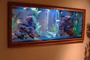 Санітари акваріума - рибки, креветки, равлики, що борються з водоростями