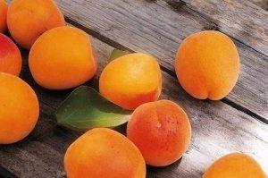 Садимо абрикос навесні: кращі поради