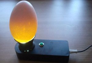 Овоскоп для просвічування яєць
