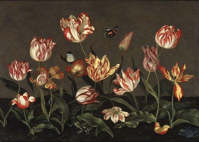 Semper augustus (серпень назавжди) - найкрасивіший тюльпан
