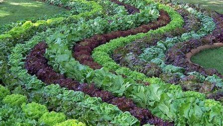 Схеми посадки - правильні відстані між овочами