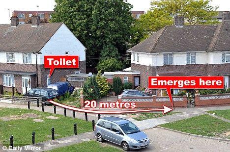 Dyno виконав цей шлях по трубі веде з туалету до каналізаційного люка перед сусіднім будинком, щоб нарешті бути врятованим.