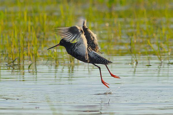 Красунчик птах фото