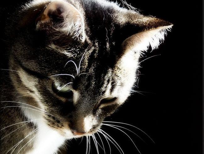 Шишка на шиї у кота