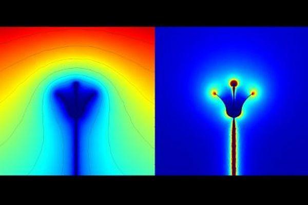 Джмелі здатні відчувати електричний заряд квітів