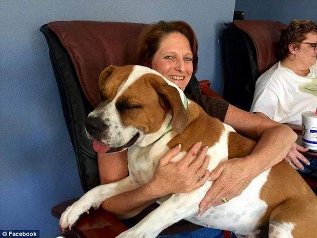 Собака врятована, її життя тепер нічого не загрожує.
