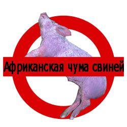 Попереджувальний знак про африканську чуму свиней