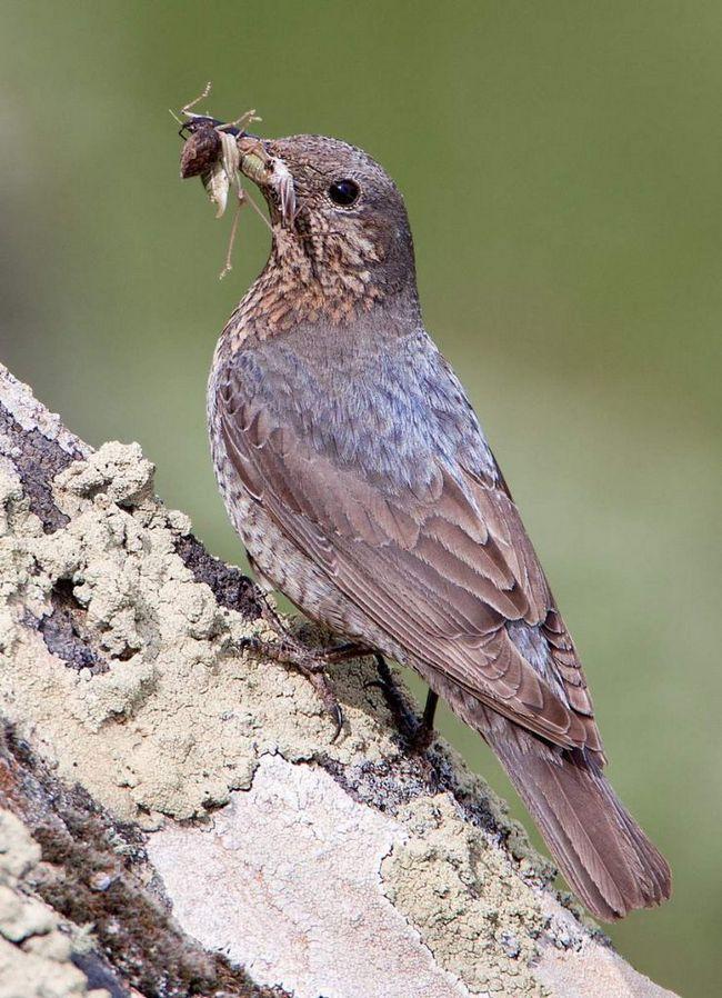Кожен птах годується на своїй ділянці.
