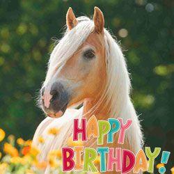 Скільки років можуть прожити коні? Які чинники впливають на довголіття?