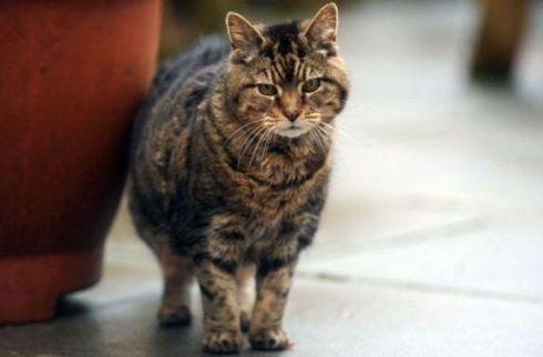 старий кіт