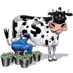 Скільки літрів молока може дати одна корова?