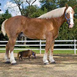 Скільки важать коні? Формули визначення їх маси