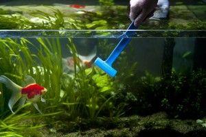 Скребок для акваріума. Чистимо скло правильно
