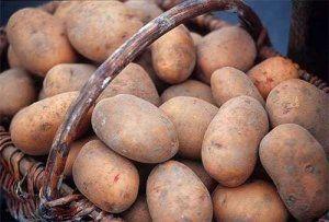 Картопля сорту «Кондор» виглядає дуже привабливо