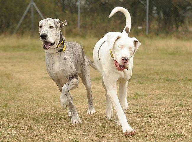 Сліпа Лілі і її вірний друг Медісон шукають новий будинок