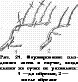 Haematopota spp