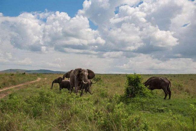 Слон посварився з биком.