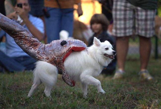 Собака по кличці Пудра в костюмі жертви пітона