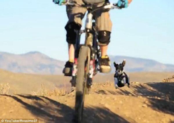 Собака по кличці Лілі обожнює гори і гонки за велосипедом