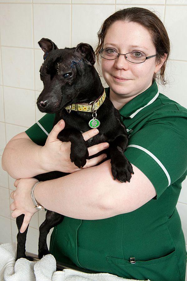 Собака зі своєю рятівницею і новою господинею