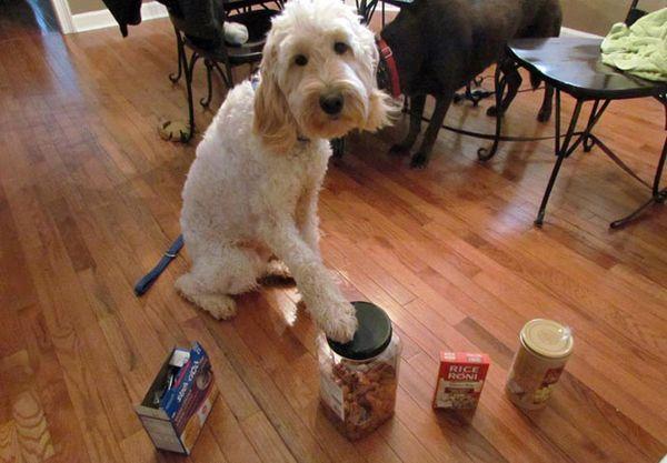 Собака кладе свою лапу на продукт, який містить горіхи