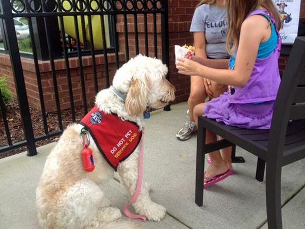 ЛіліБель забезпечена спеціальним позначенням, що вона не просто домашній улюбленець, а собака-помічник