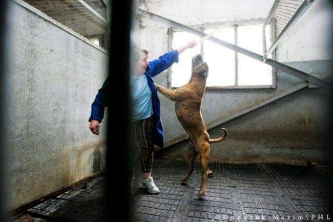 Собаки з притулку