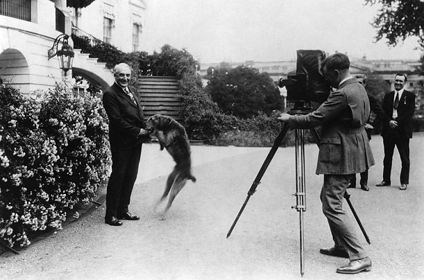 Гардінг і його ердель-тер`єр ЛАДДЯ Бой - цієї собаці належало власне крісло ручної роботи, в якому вона сиділа на всіх зустрічах вищого рівня. Її день народження святкували спеціальної