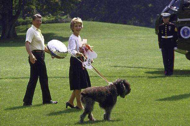 Президент США Рональд Рейган і фландрский Був`є