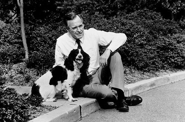 Президент США Джордж Буш-старший і спрингер-спаніель Міллі