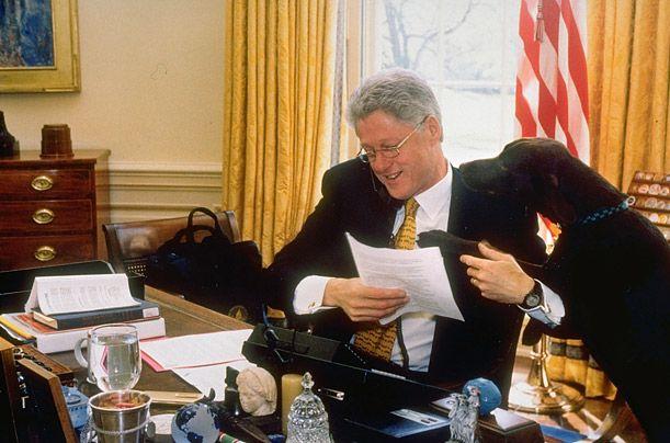 Білл Клінтон з шоколадним лабрадором Бадді