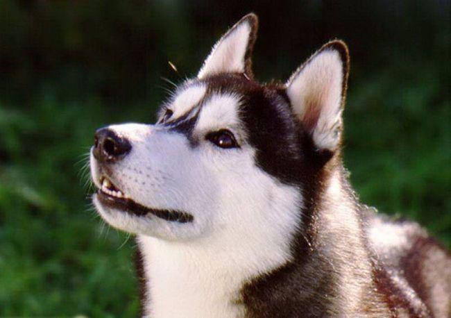 Собаки вміють читати по обличчях.