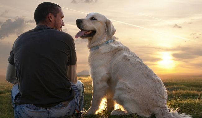 Схоже, що собаки можуть інтерпретувати відразу масу людських дій, зводячи їх воєдино.