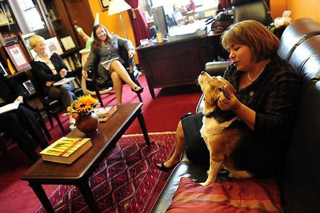 Собаки в сенаті
