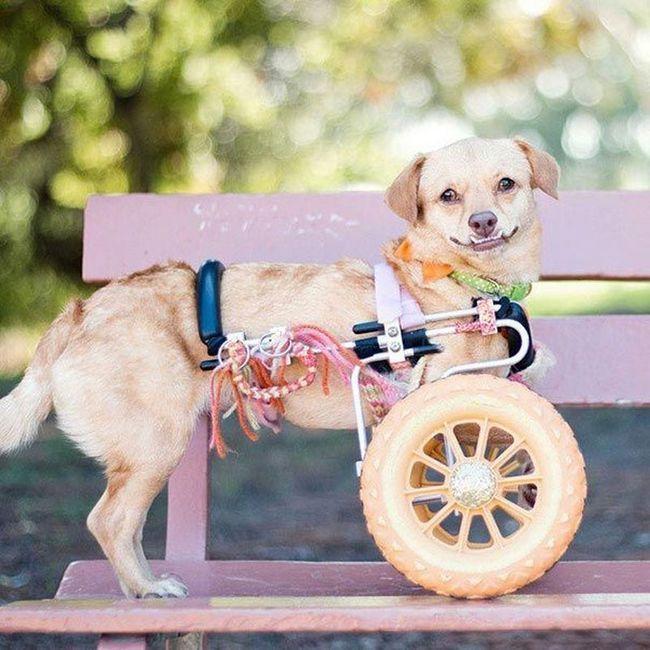 Собаку-інваліда врятували від евтаназії