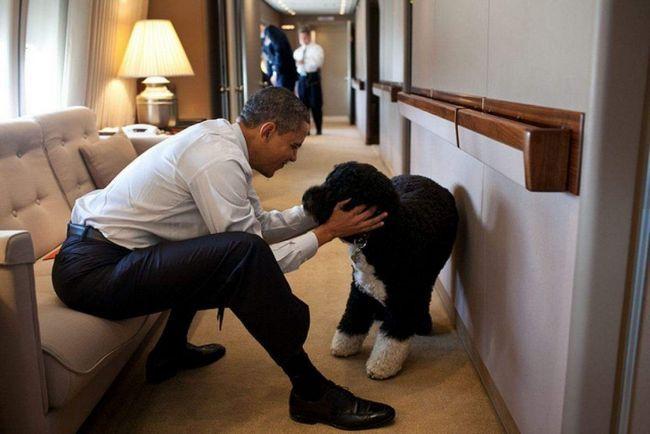 Обама і Бо.