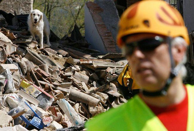 Собака провела під завалами дев`ять днів, перш ніж її врятували.