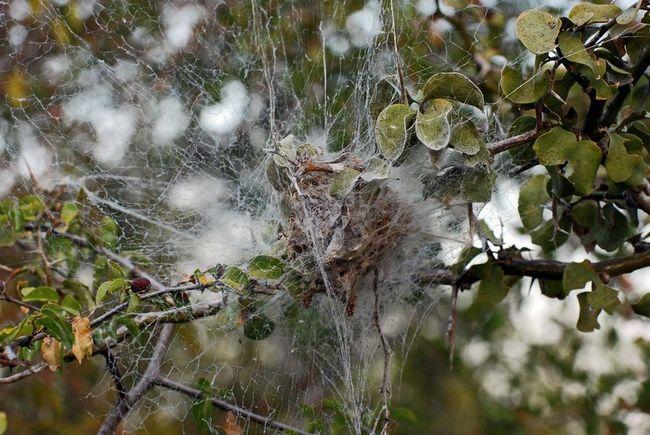 Соціальні павуки