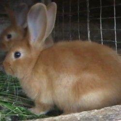 Зміст кроликів