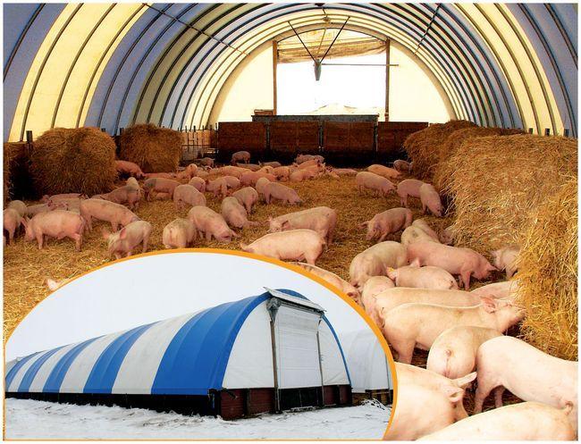 Зміст свиней на глибокій підстилці